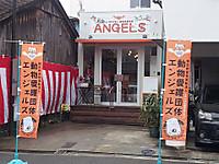 Angels_osaka_cat_shelter_2